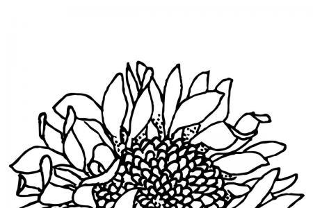 向日葵花瓣