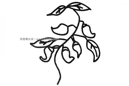 四步学画没摘的辣椒