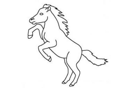 动物简笔画大全 小马简笔画图片