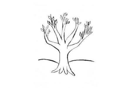 春天长新叶的大树简笔画