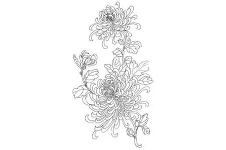 漂亮的菊花简笔画卡通