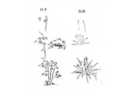 植物图片 竹子和剑麻的简笔画画法