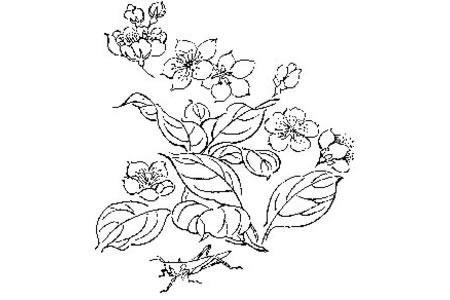 蚱蜢和漂亮的花