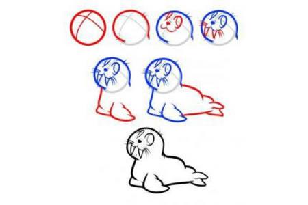 可爱的小海豹简笔画步骤图