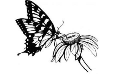 昆虫简笔画大全 蝴蝶简笔画