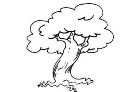 关于大树的简笔画