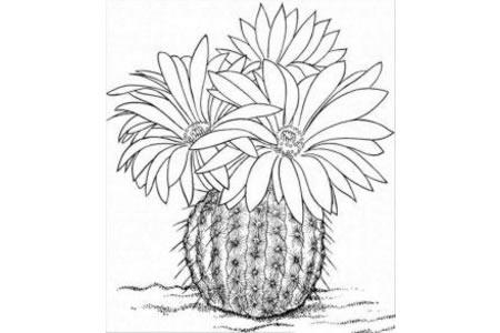 植物简笔画大全 漂亮的仙人球简笔画图片