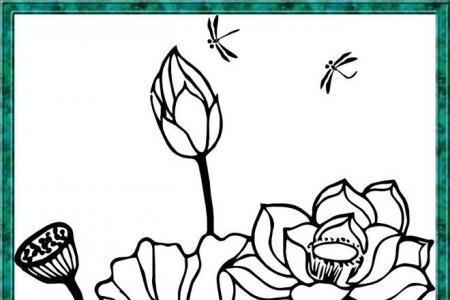 荷花上的蜻蜓手绘素描