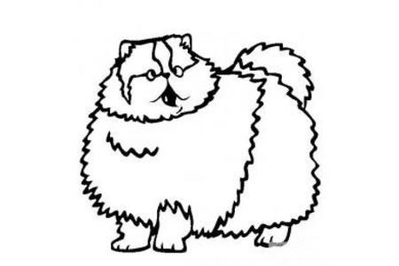 猫咪图片 简笔画波斯猫