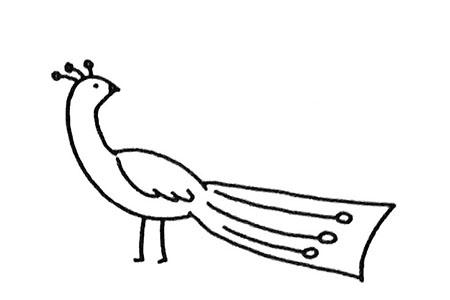 学画简单的孔雀