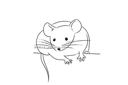 各种种类的老鼠 小白鼠