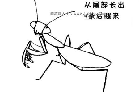 螳螂简笔画教程