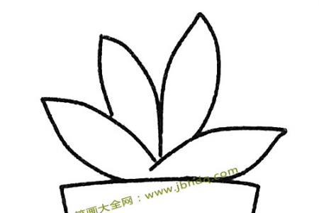 简单的多肉植物简笔画教程