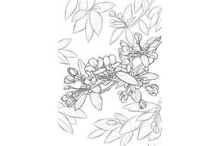 苹果树的花怎么画