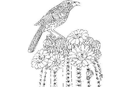 漂亮的小鸟和漂亮的仙人掌