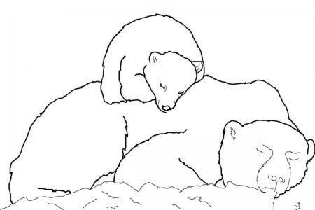 北极熊宝宝睡在妈妈背上