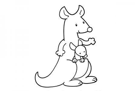 袋鼠妈妈揣着小袋鼠