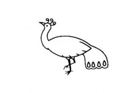丰满的孔雀简笔画图片