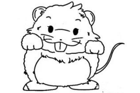 超萌的小老鼠