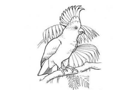 聪明的鹦鹉简笔画