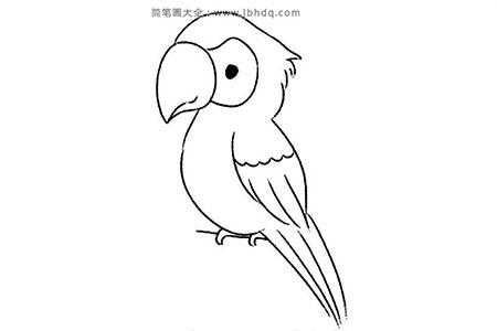 聪明的鹦鹉简笔画教程