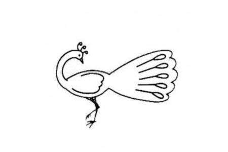 梳理羽毛的孔雀简笔画