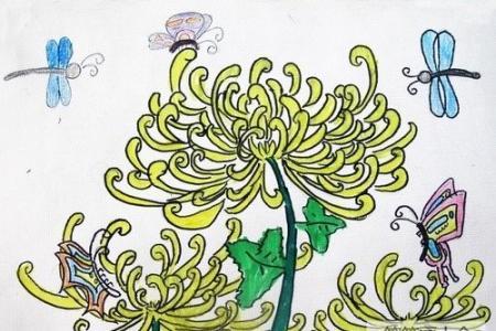 儿童手绘野菊花简笔画