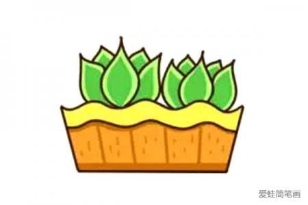 漂亮的多肉植物简笔画8