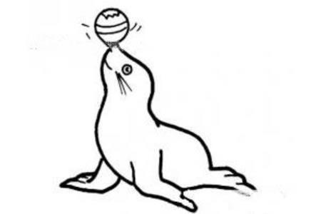 玩球的海豚