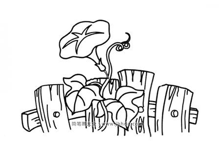 栅栏里的喇叭花
