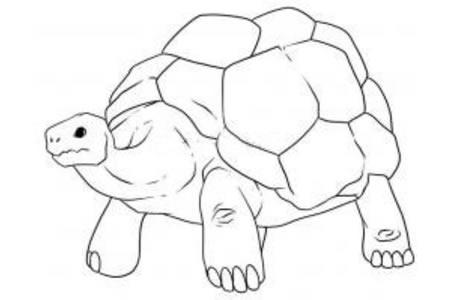 一只老乌龟