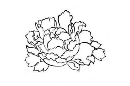 儿童花朵简笔画 牡丹花