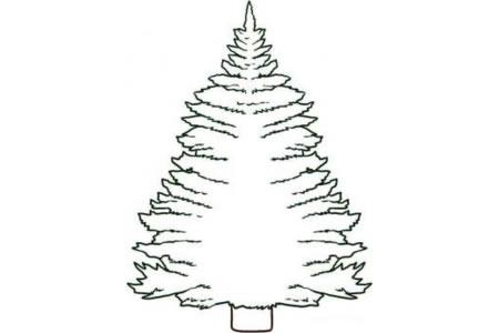 松树简笔画图片