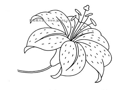 漂亮的百合花花朵