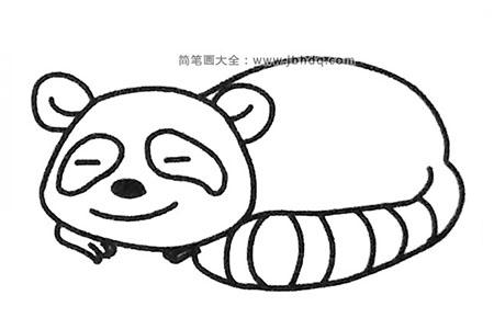 六张可爱的浣熊简笔画图片