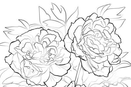 三朵牡丹花