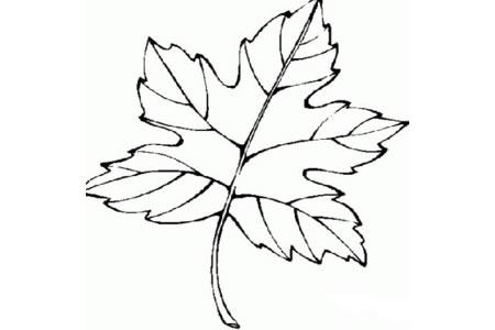手绘儿童枫叶简笔画