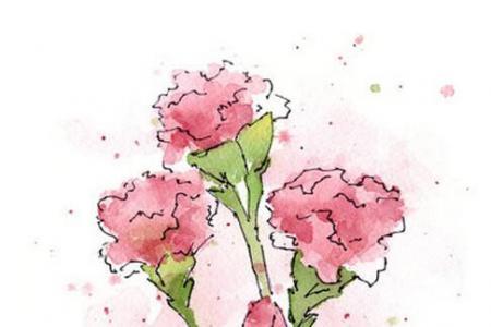 献给妈妈的康乃馨关于妇女节的画展示