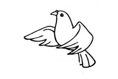 白鸽简笔画图片