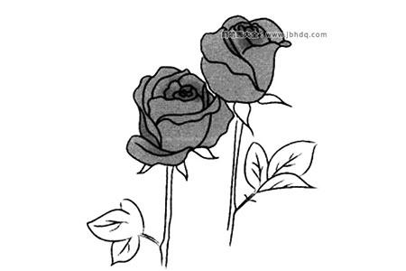春天的花朵 玫瑰花