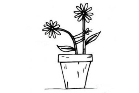 盆里的小花简笔画