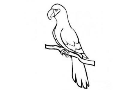 小鸟简笔画 鹦鹉简笔画图片