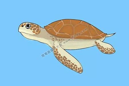 分步学画:乌龟