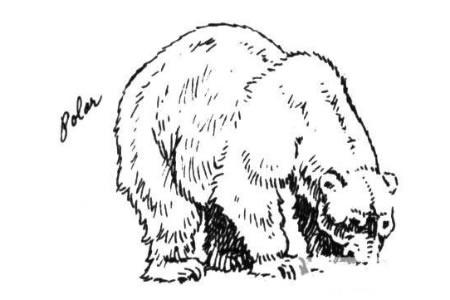 吃东西的北极熊