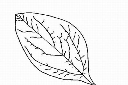 一片片树叶简笔画