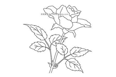简笔画图片漂亮的玫瑰花