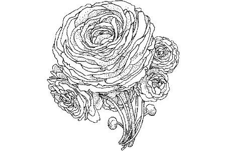 牡丹花怎么画