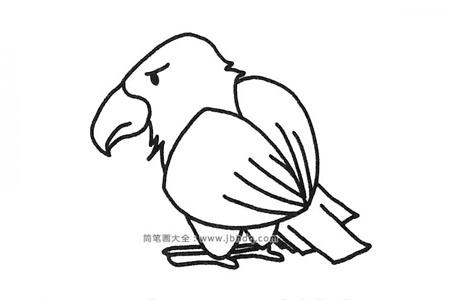 一组老鹰简笔画图片