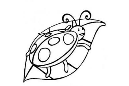 昆虫图片 瓢虫简笔画图片