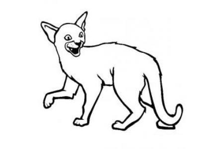 猫咪图片 简笔画阿比西尼亚猫